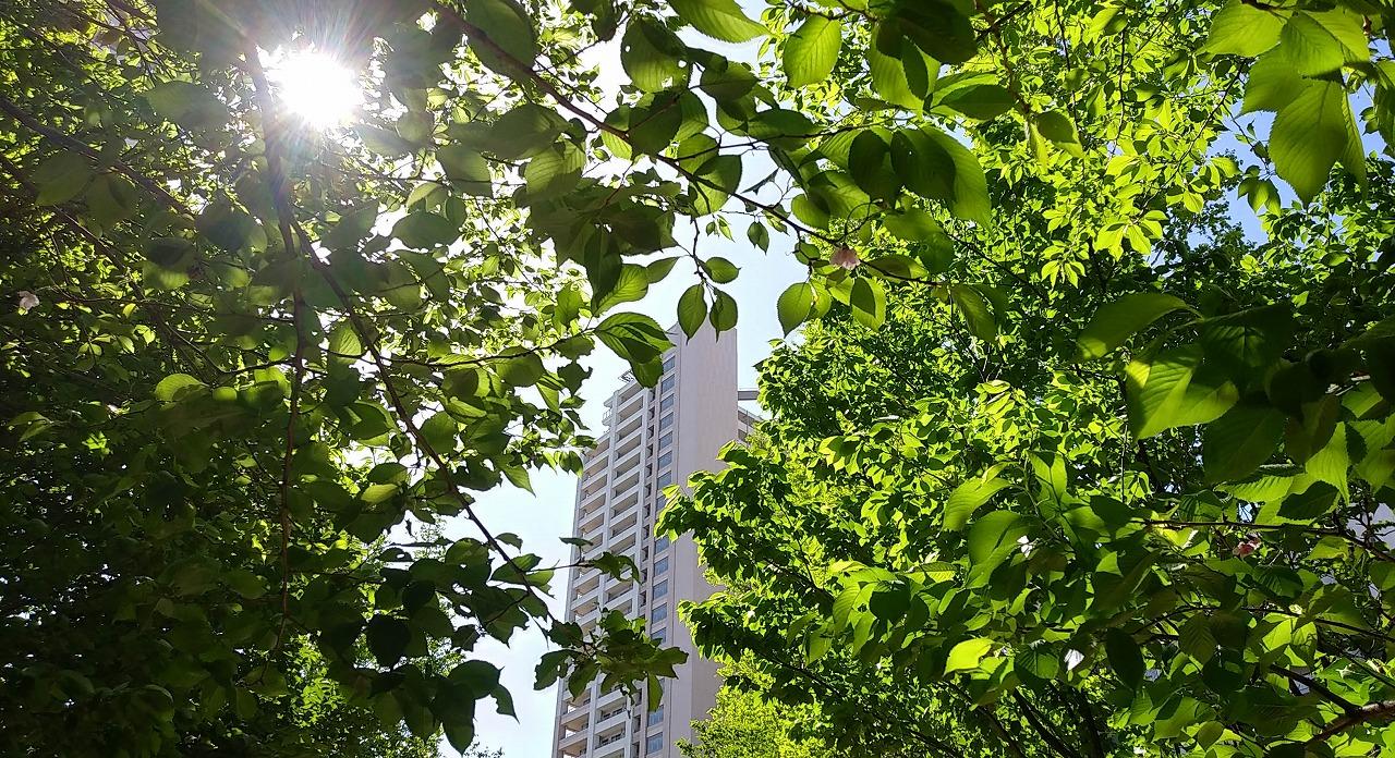 パークシティ柏の葉
